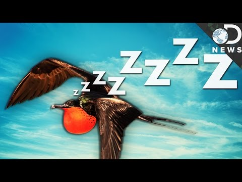 How Can Birds Sleep While They're Flying?