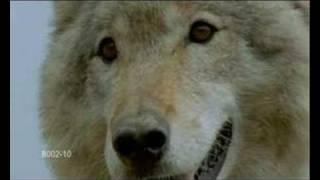 Wolves - Look Through My Eyes