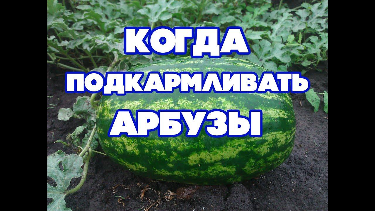 Объявление о продаже сухой лед в ставропольском крае на avito.