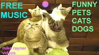 funny pets - cats dogs animals, amazing original song ♫ best free music 2018