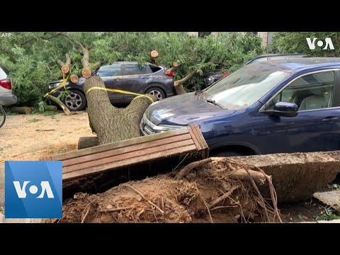 Hurricane Isaias Uproots