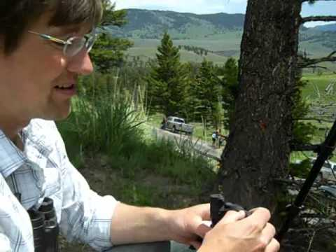 Sculpting a black bear from life in Yellowstone
