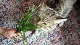 Есть ли души у животных (наш кот усатый как Ницше)