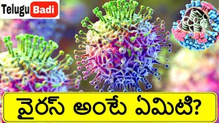 What is Virus | How do viruses work in Human Body in Telugu | Corona Virus | Telugu Badi