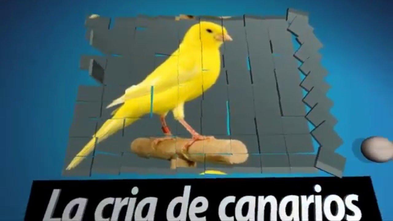 cataratas en canarios