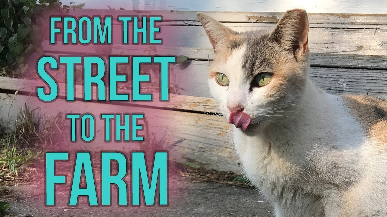 fia-the-feral-gets-a-barn-home