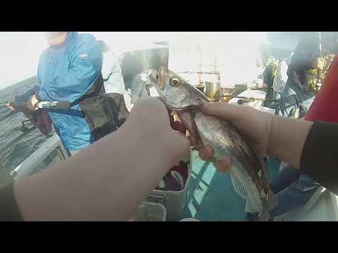 Deep Sea Fishing With Eastman's Fishing Fleet