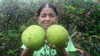 Organic Village Foods - Breadfruit Breakfast prepared in my Village by my Mom