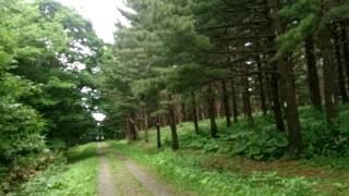 セミの鳴き声、鳥のさえずり、風で葉がこすりあう音。緑の薫り。マイナ...