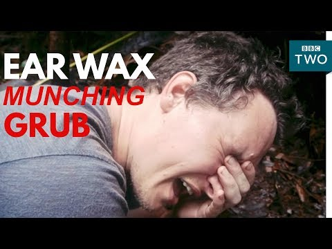 Jungle grub eats ear wax! | My Year with the Tribe - BBC Two