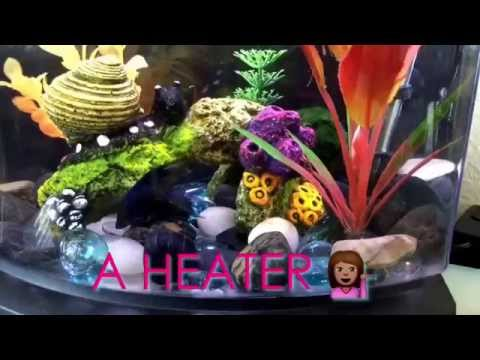How to keep a betta happy/healthy