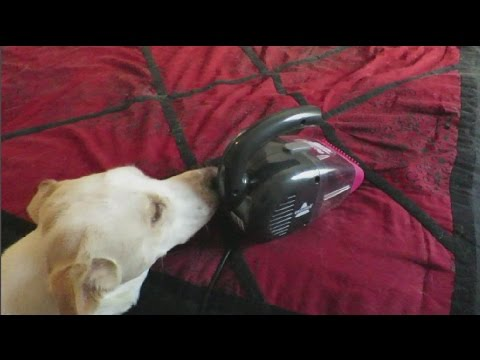 Bissell Pet Hair Eraser Handheld Vacuum, Corded 33A1
