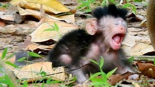 NEWBORN BABY MONKEY JAYDEN CRIES TILL RED FACE COZ ANGRY MOM CARELESS TO HER