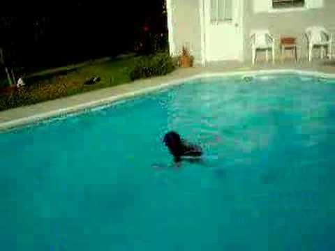 Члены в бассейне — img 11