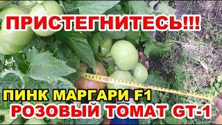 ПРИСТЕГНИТЕСЬ!!!))) Индетерминантный РОЗОВЫЙ ТОМАТ ПИНК МАРГАРИ F1. Часть №5