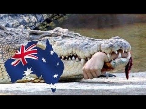 Крокодил съел очередного купальщика в Австралии