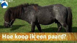 Hoe koop ik een paard? | NH Bokt TV