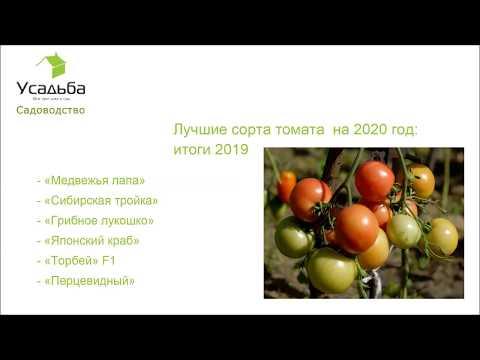 Лучшие сорта томата на 2020 год для открытого грунта по итогам 2019
