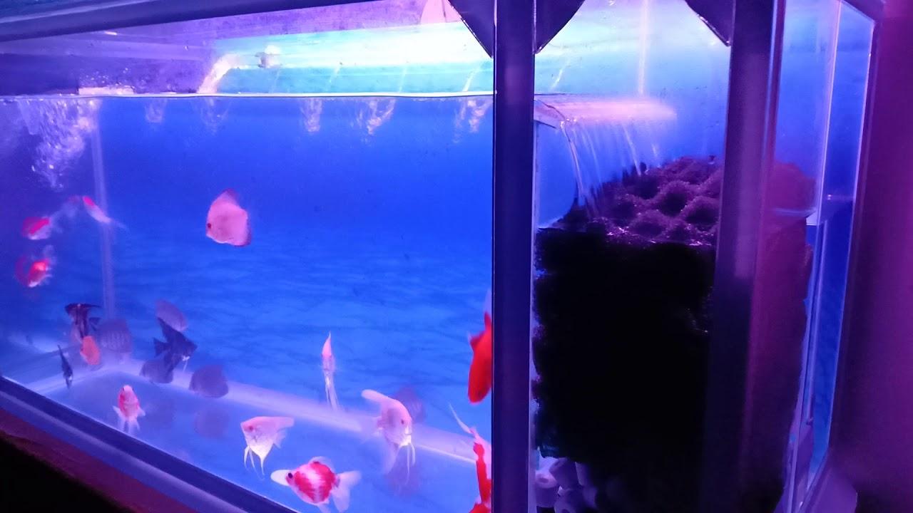 Aquarium Filter samping - YouTube