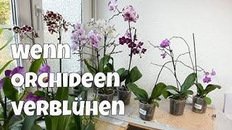 Wenn Orchideen verblühen - Was ist zu beachten? - Alles über Orchideen #14