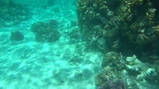 Giftun Island Hurghada Egypt