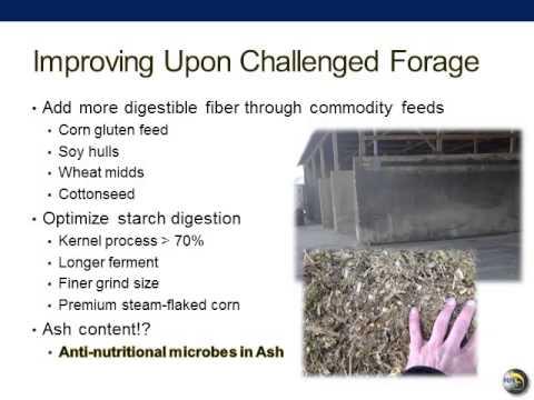 Expert Webinar on High Quality Fermented Forage