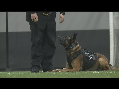 Local police K9 competes on A&E show 'America's Top Dog'