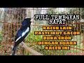 Full Tembkan Rapat Kacer Lain Pasti Ikut Gacor Buka Ekor Dengar Suara Kacer Ini  Mp3 - Mp4 Download