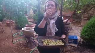 Recogida de las ciruelas [cosecha]  `[ htpp://blog.albertmariagil.com/] Thumbnail