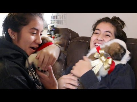 Surprising my sister with a puppy!