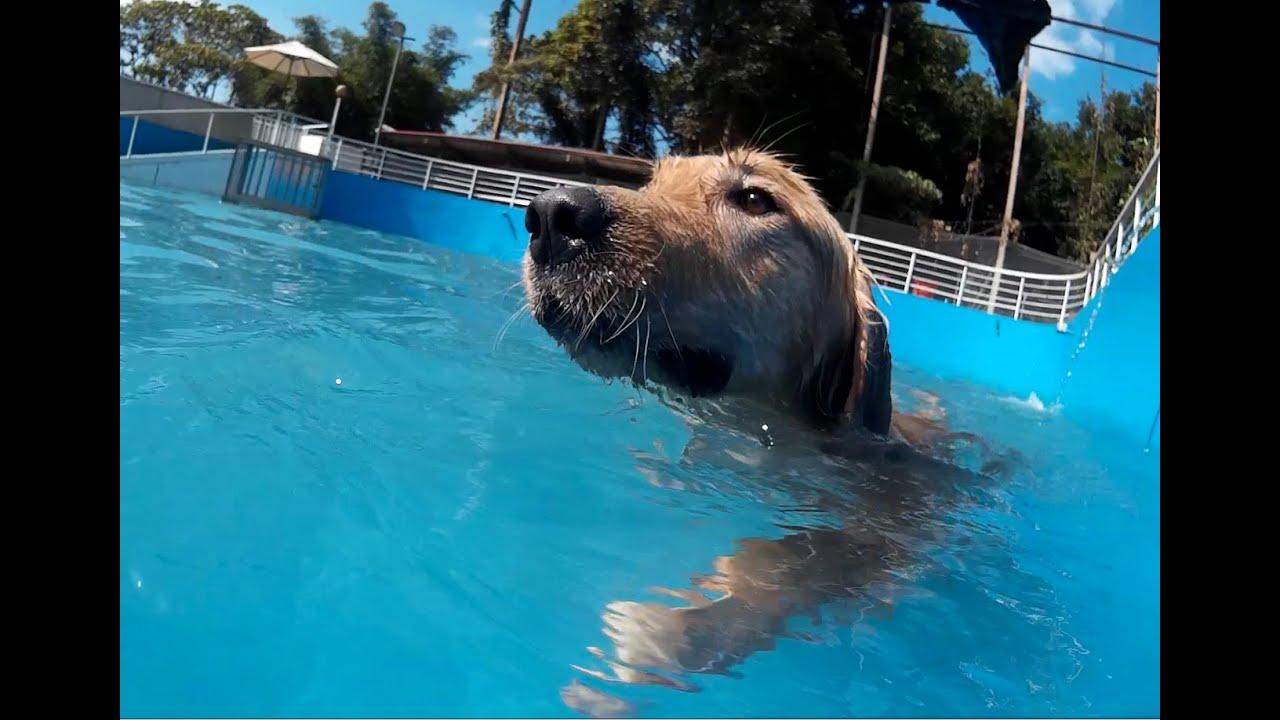 GoodDog 妙狗寵物游泳池~第一次下水 - YouTube