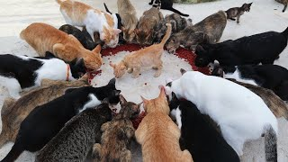 Many Cat Eating Food  😱😱😱