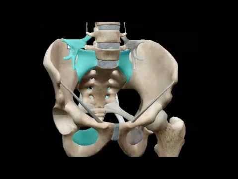 Pelvimetria obstetrica