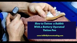 How to Tattoo a Rabbit - Getting Ready for a Rabbit Show