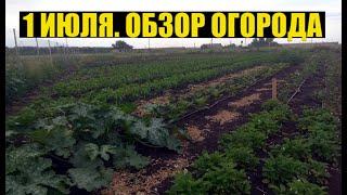 Перец, Хризантема, Клубника, Земляника - обзор огорода.