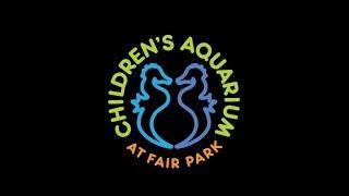 TRIP TO THE DALLAS TEXAS CHILDREN'S AQUARIUM / SHARKS / TURTLES / SEA CREATURES / WOW! MUST SEE