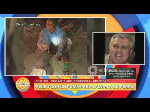 Un campesino peleó mano a mano contra un puma para salvar a
