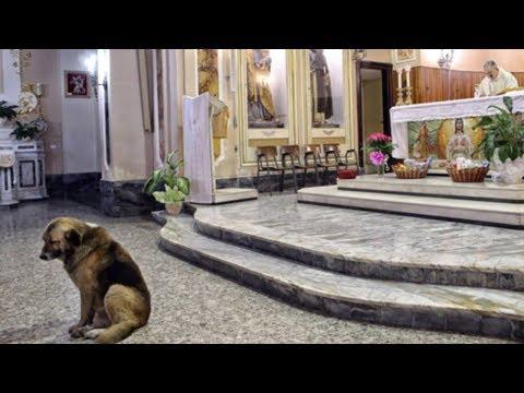 Cãozinho espera todos os dias na igreja por seu dono que se foi