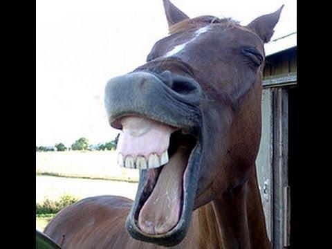 videos chistosos 2014 una risa extraña de un burro show parte #2 ...