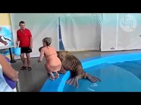 حيوان فقمة يتحرش بفتاة ترتدي ملابس البحر