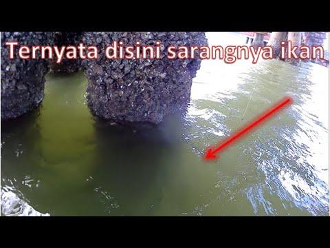 Anjrit Mancing Dibawah Jembatan Pertamina Strike Terus