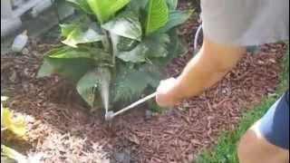 A garden duster effortlessly applying Diatomaceous Earth powder...