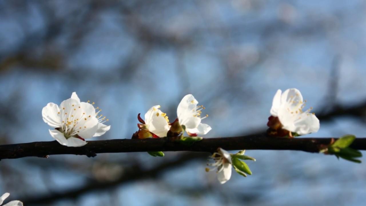 Видео цветы и музыка для души