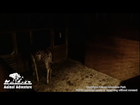 Animal Adventure Park Live Stream