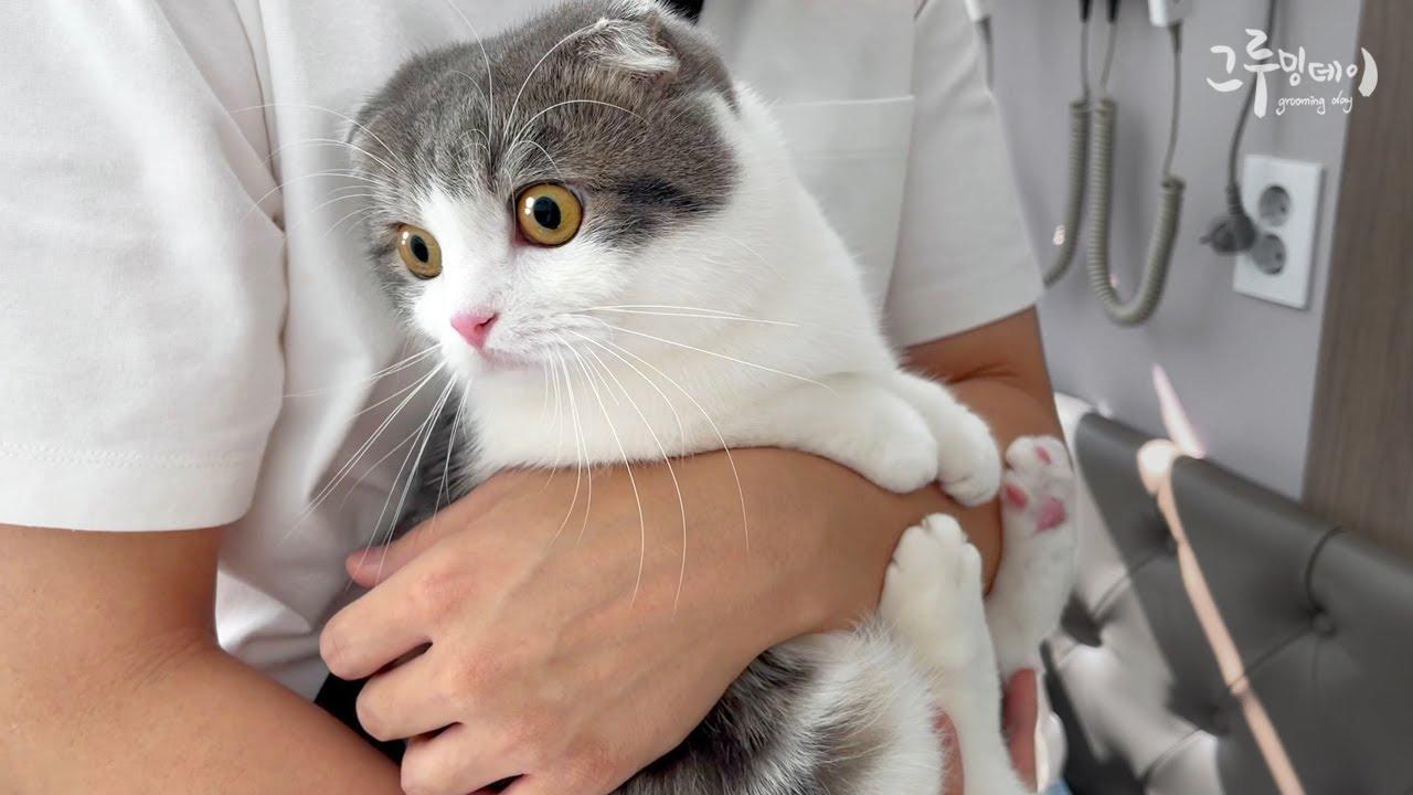 고양이를 안고 응급실로 뛰었어요