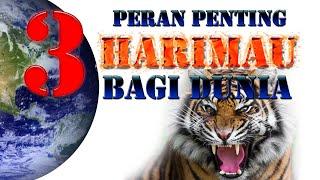 3 Peran Penting Harimau Bagi Dunia