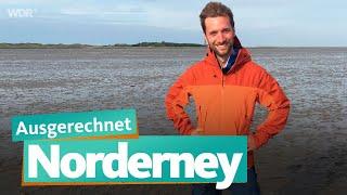 Ausgerechnet Norderney | WĎR Reisen