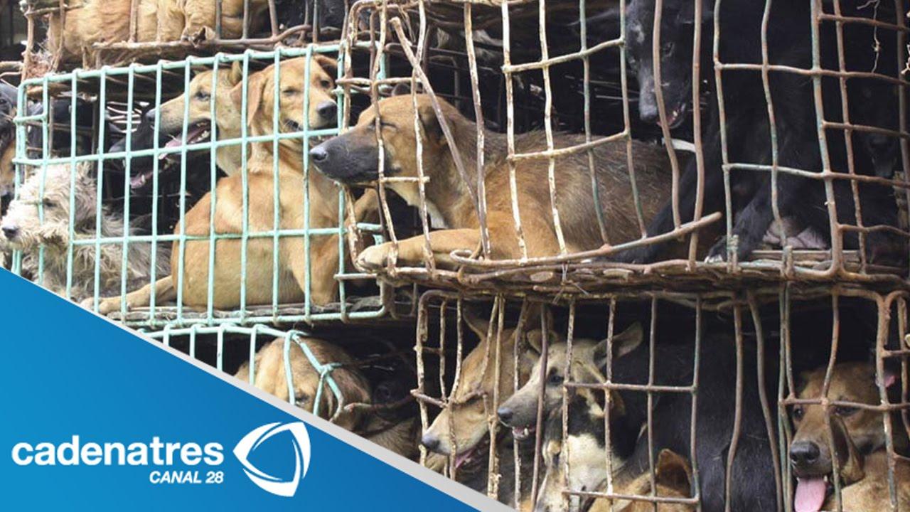 Rescatan en tlaquepaque a perros encerrados en jaulas de for Jaulas de perros