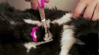 Scaredy Cut Silent Home Pet Grooming Kit for Cats and Dogs