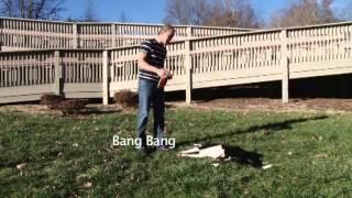 Dog Under Arrest And More!